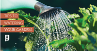 Tips to Watering Your Garden
